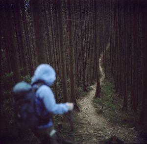 trailthruwoods